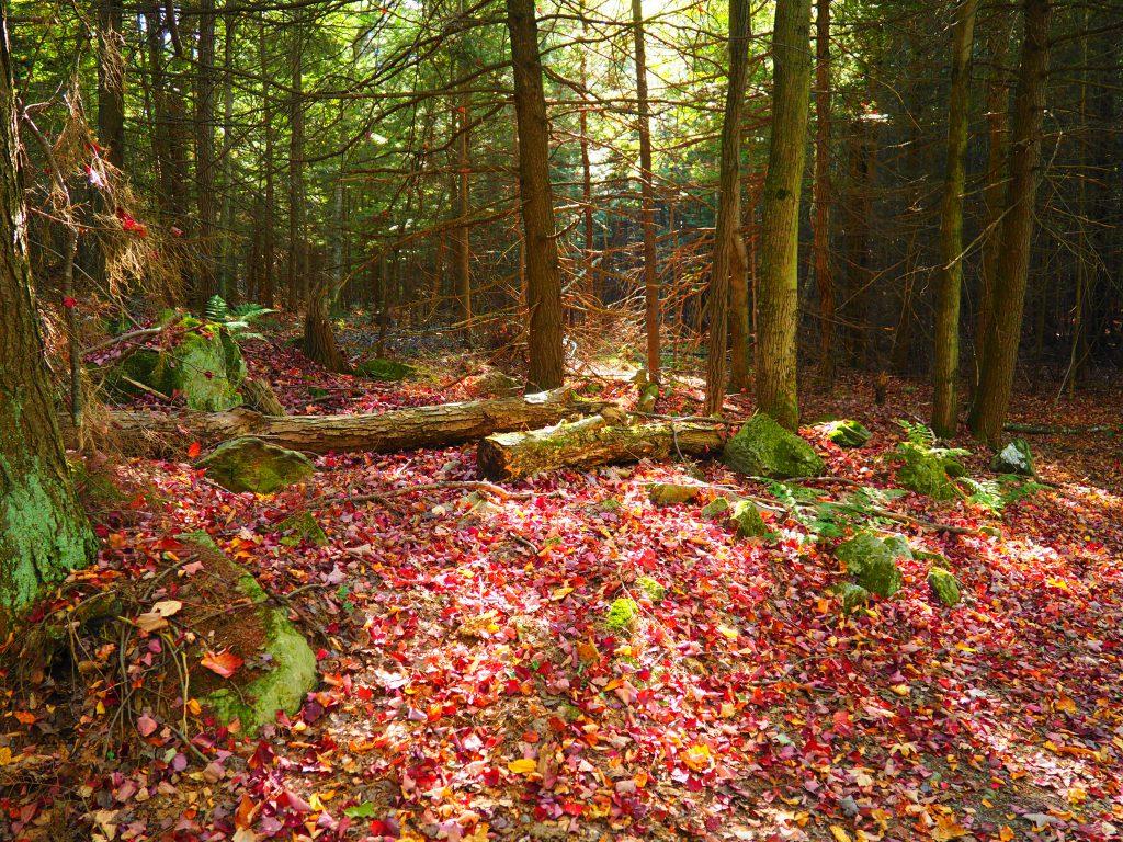 Couleurs d'automne en Montérégie
