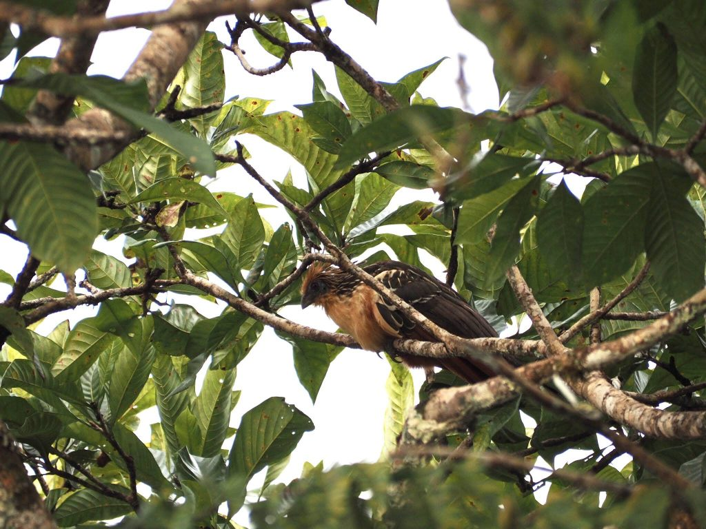Découvrir Amazonie 4 jours Equateur