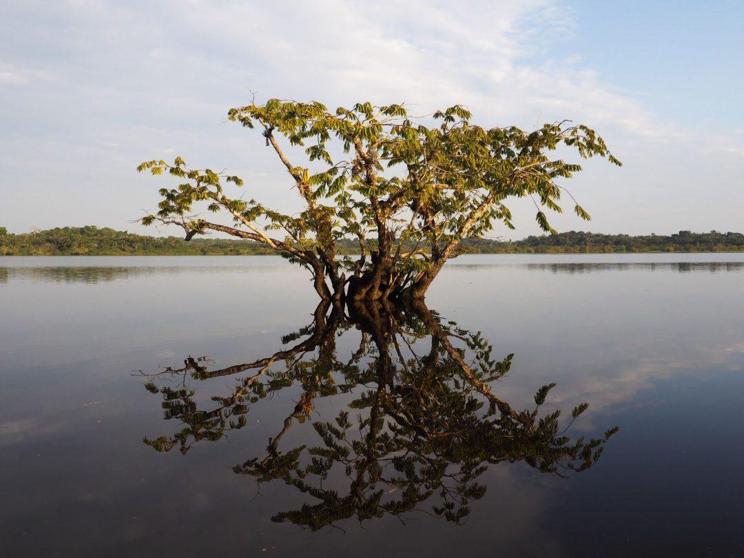Découvrir l'Amazonie 4 jours en Equateur